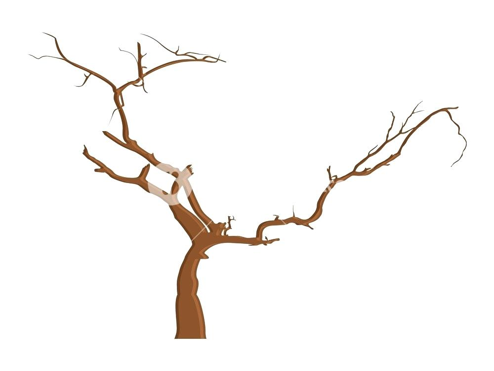 1000x750 drawing branches image drawing tree branches images