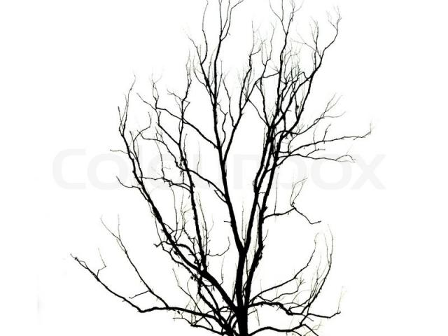 640x480 drawn dead tree dead plant