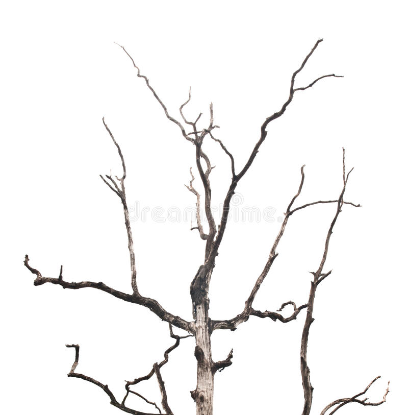 800x813 pictures of tree branches branches of dead tree stock photo image