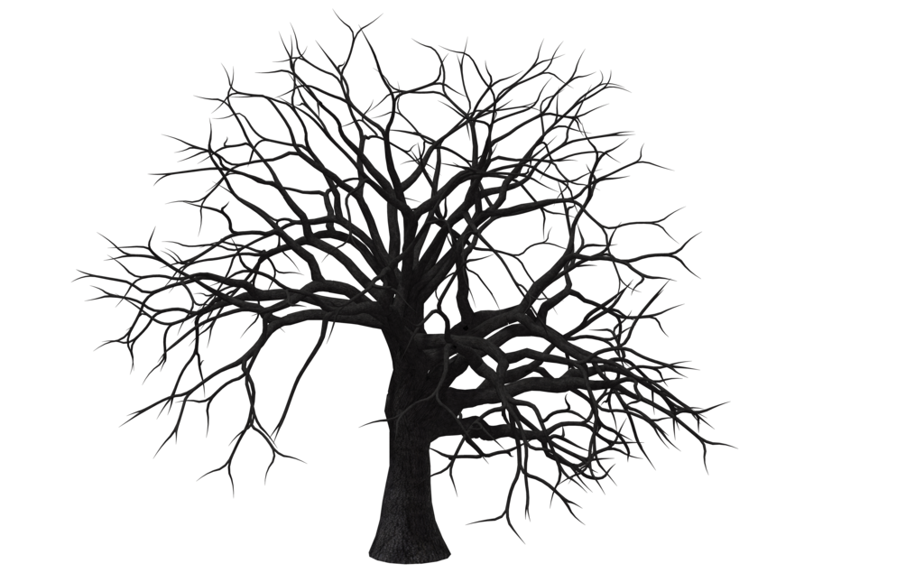 1024x645 deciduous tree download free clipart with a transparent background