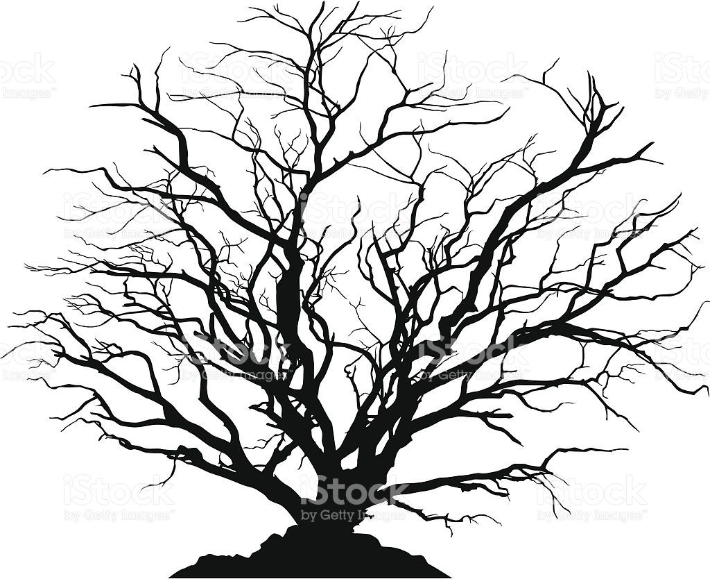 1024x834 silhouette of a round shaped deciduous tree with no leaves ground