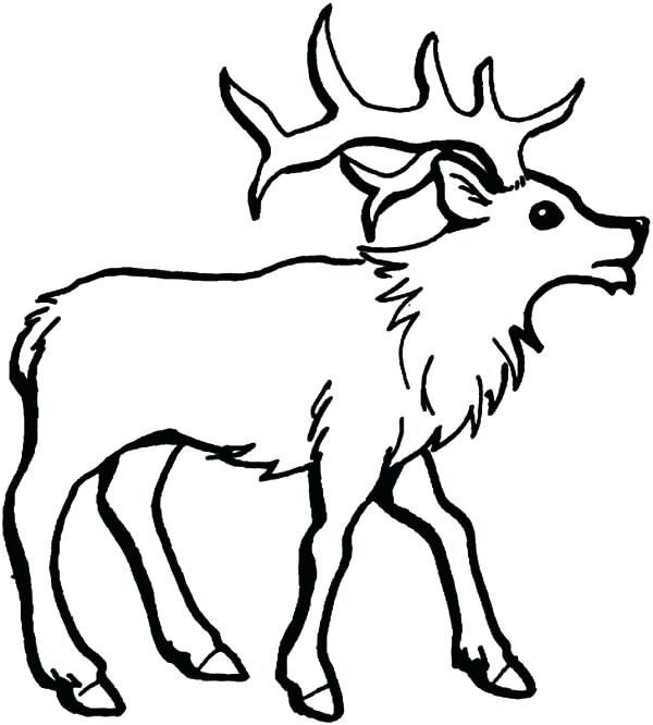 600x666 How To Draw Moose Drawn Moose Baby Draw Moose Head