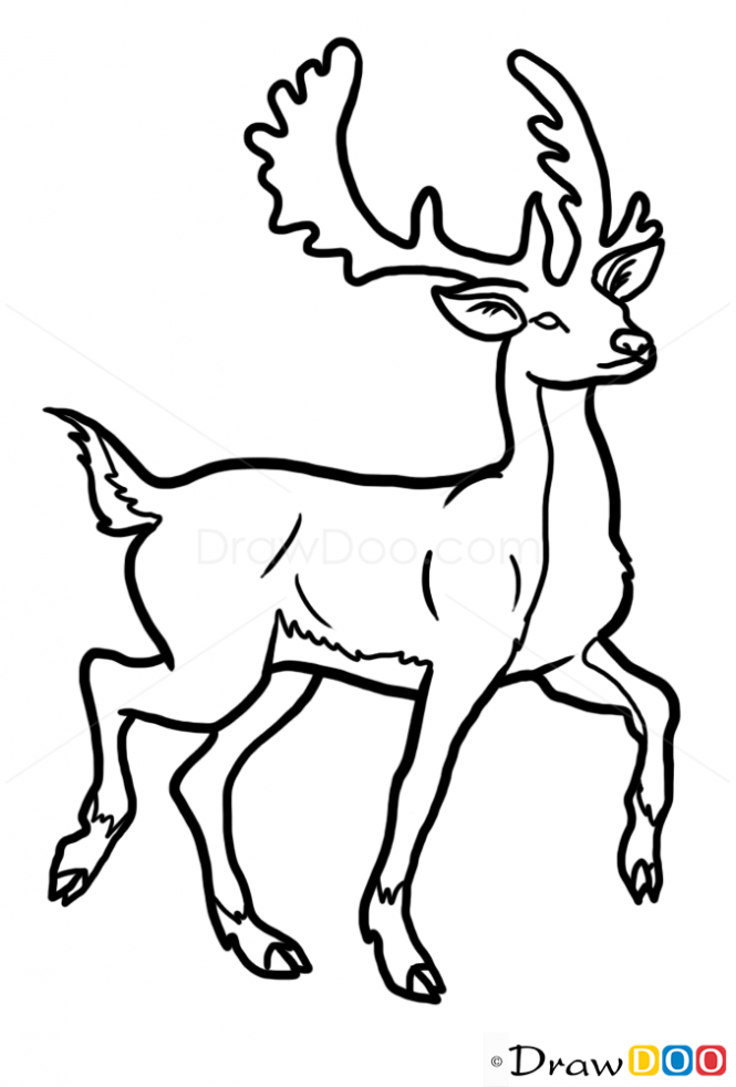 665x982 How To Draw Deer, Wild Animals Art Drawings, Deer Drawing