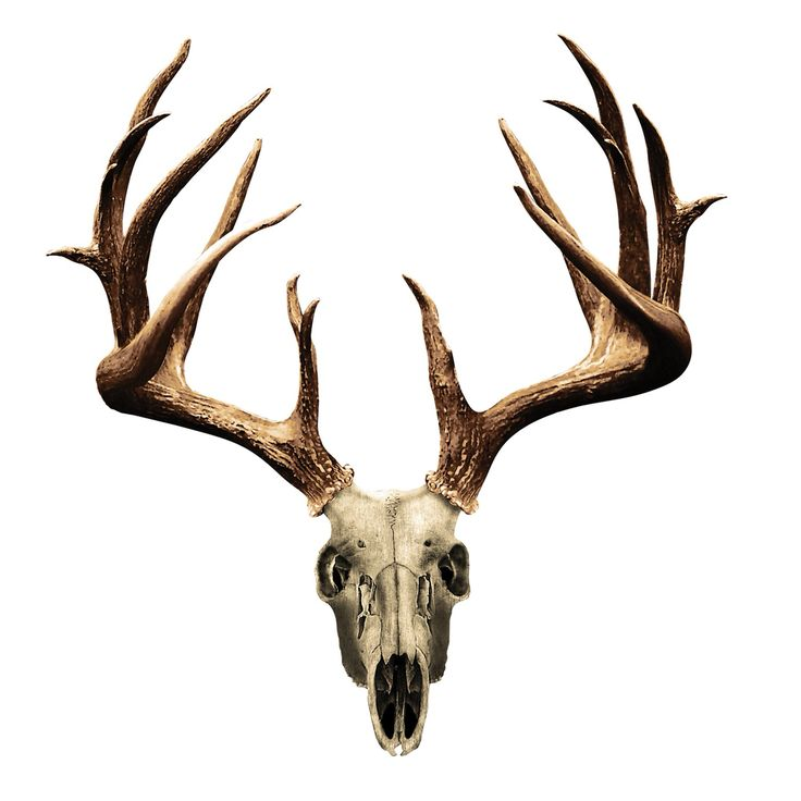 736x736 For My Mans Deer Skull Drawing