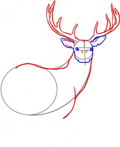 246x302 How To Draw A Deer, Step