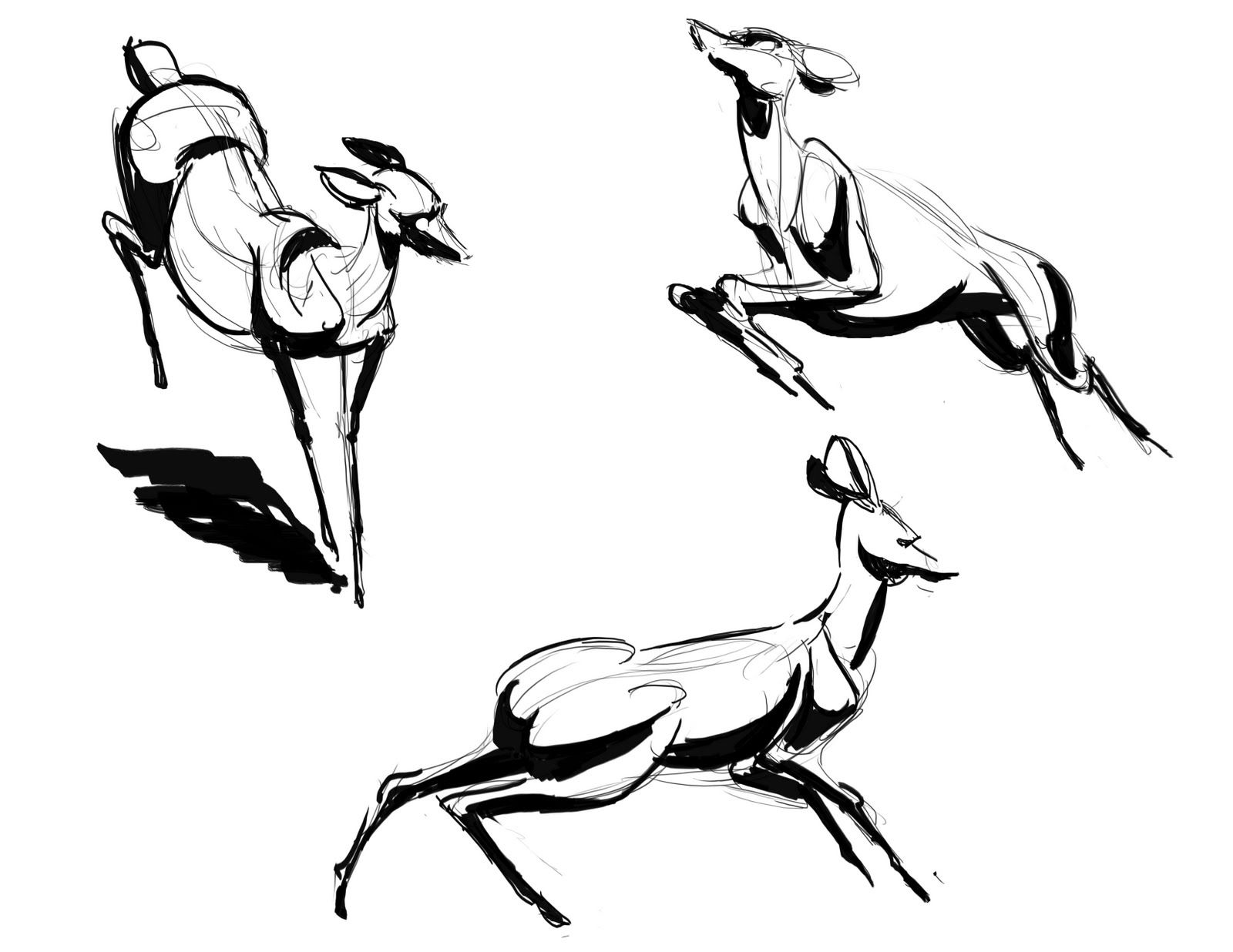 1600x1236 Martin Wittig Drawing In Deer Sketch, Art, Sketches