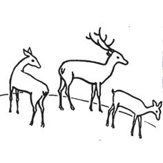 236x236 Awesome How To Draw Deer Images Sketches, Drawing S, Drawing