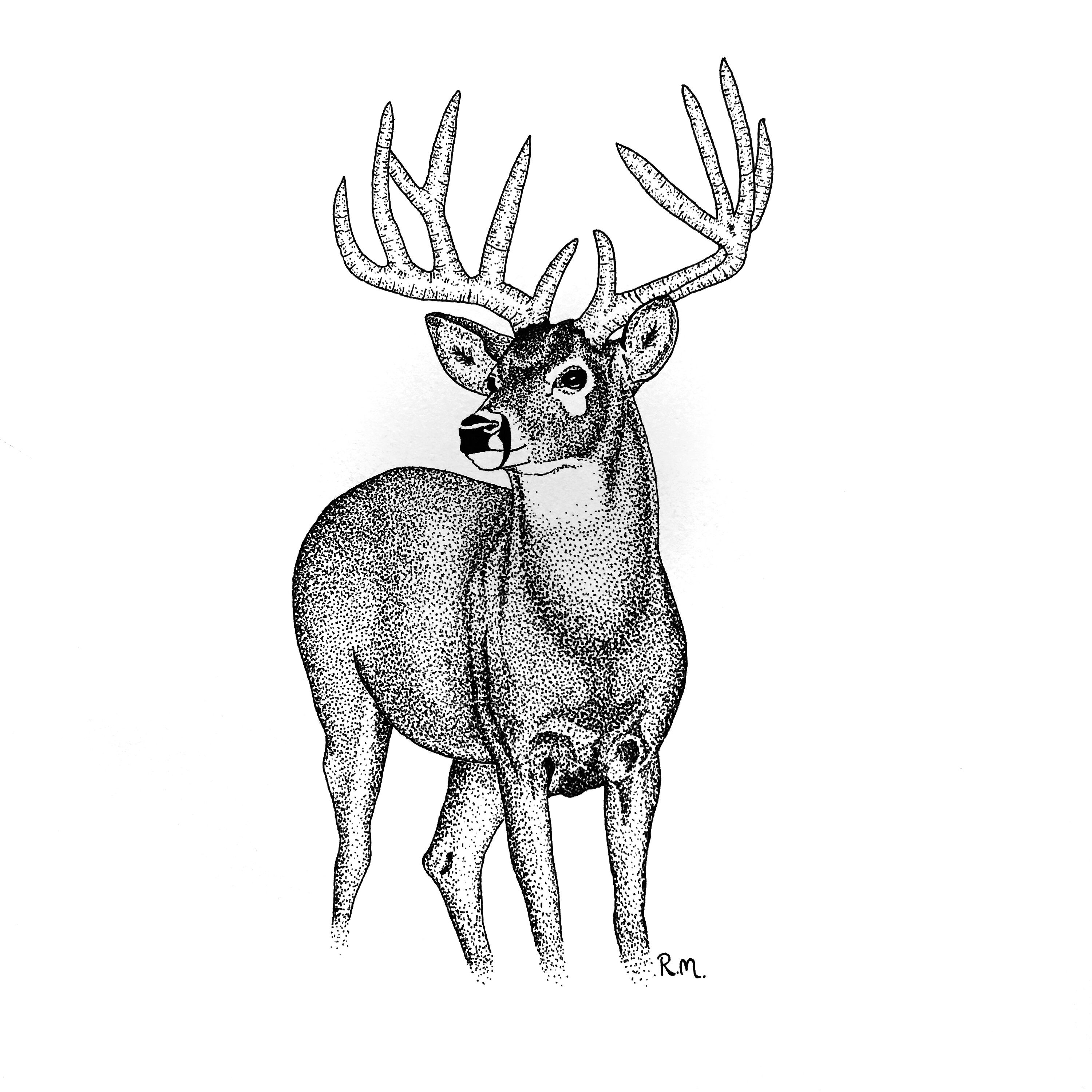 3000x3000 Daily Drawing Deer For Free Download