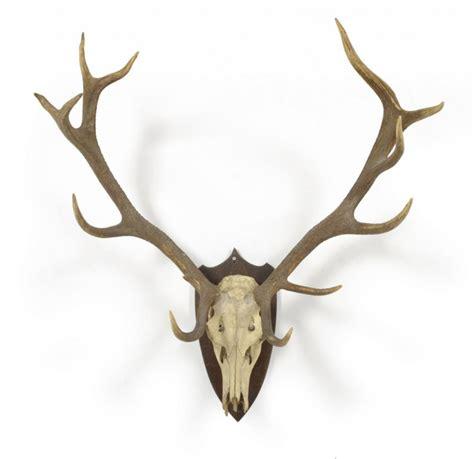 474x459 Deer Antlers