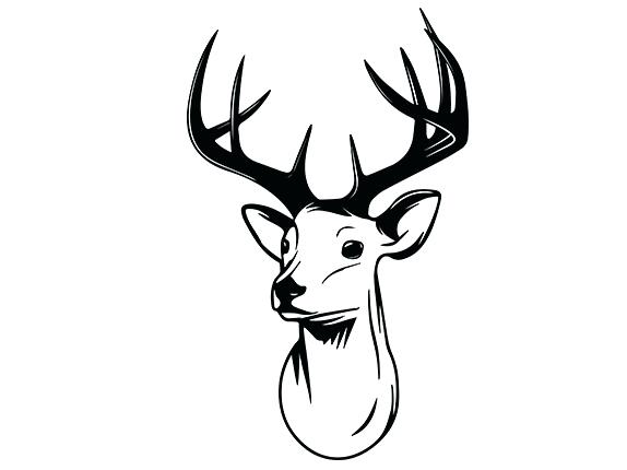 574x430 how to draw a easy deer simple deer drawing com draw a deer head