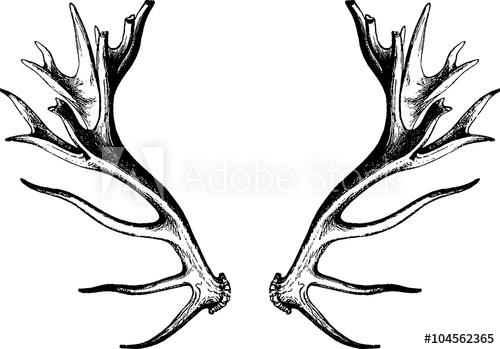 500x349 Vintage Drawing Deer Antlers