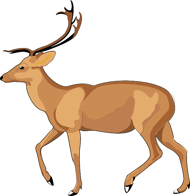 620x640 Impala Drawing Deer Transparent Png Clipart Free Download