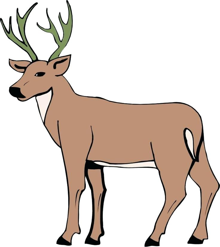 736x826 drawing of deer deer drawing step drawing deer