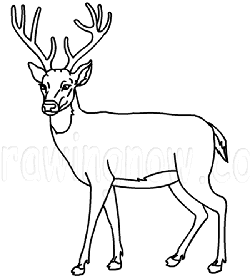 250x278 How To Draw Deer Drawing Tutorials Drawing How To Draw Deer