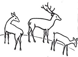 254x184 How To Draw Deer Step