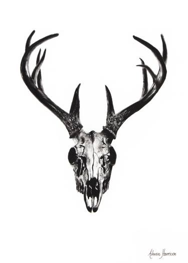 375x525 Jgmfoeqi In Deer Skull Drawing