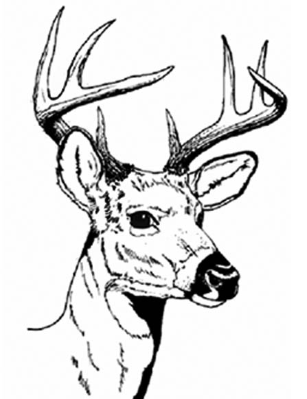 447x582 Deer Head Line Drawing
