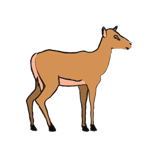 550x550 Impala Drawing Deer Transparent Png Clipart Free Download