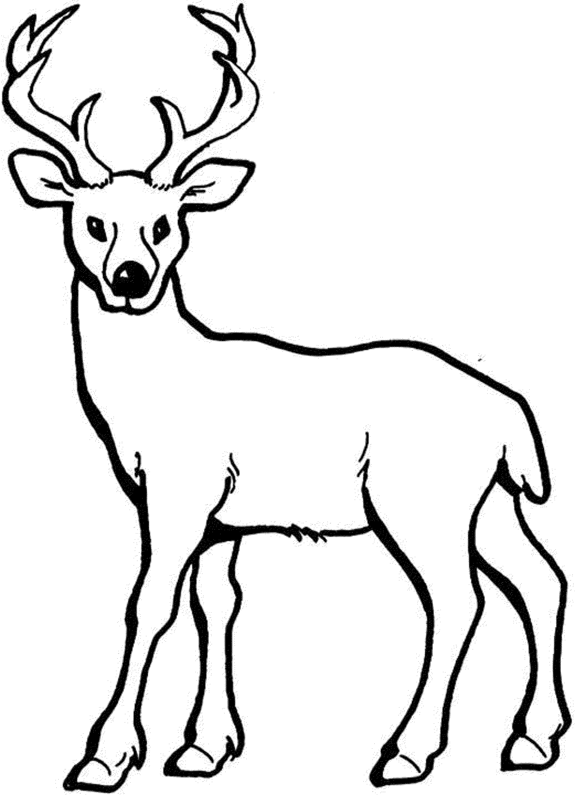 2000x2764 Whitetail Deer Drawing White Tailed Coloring