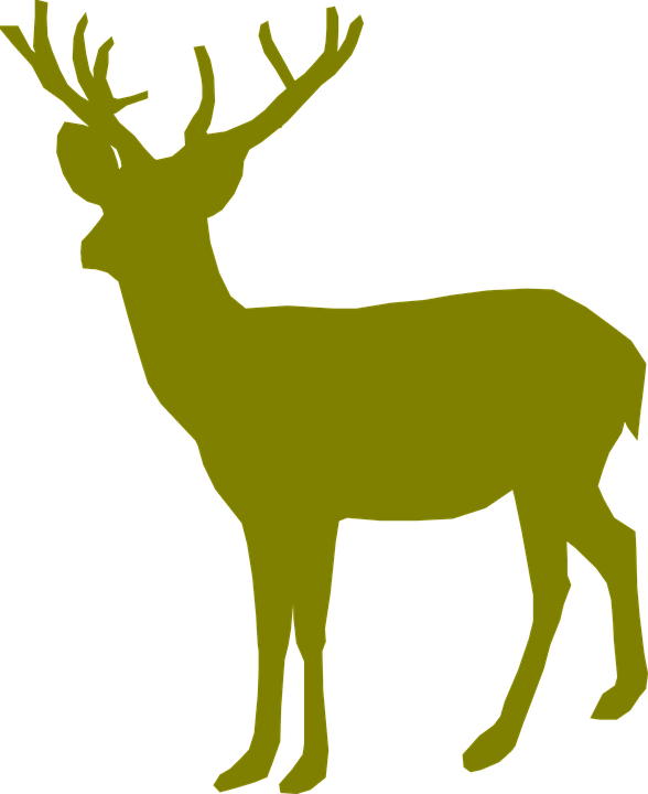 588x720 Collection Of Free Stream Drawing Whitetail Deer Download On Ui Ex