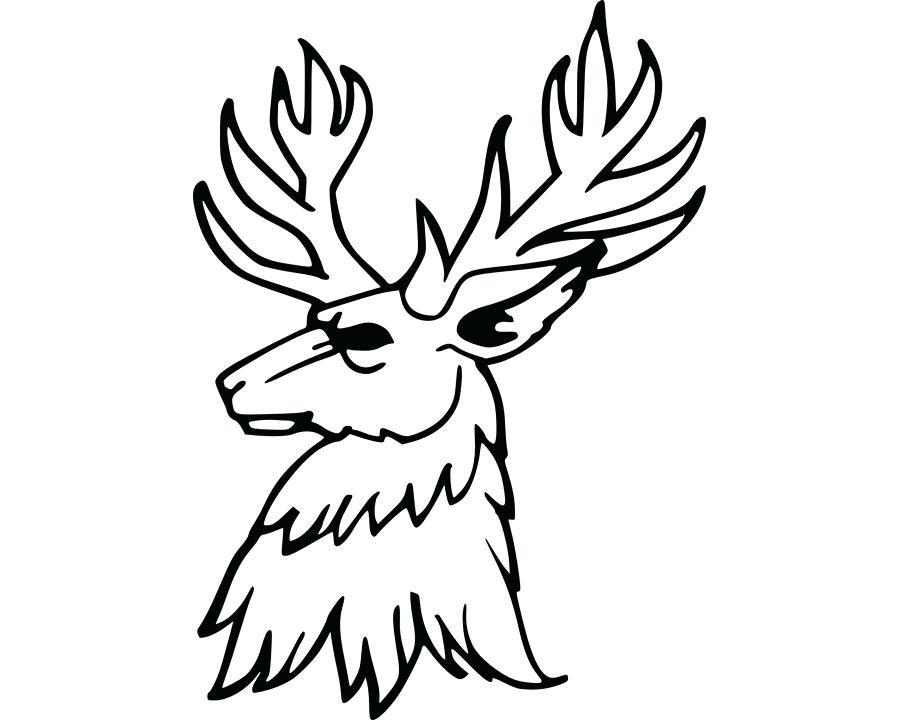 900x720 How Do You Draw A Reindeer Buck Drawing Reindeer Deer Antlers