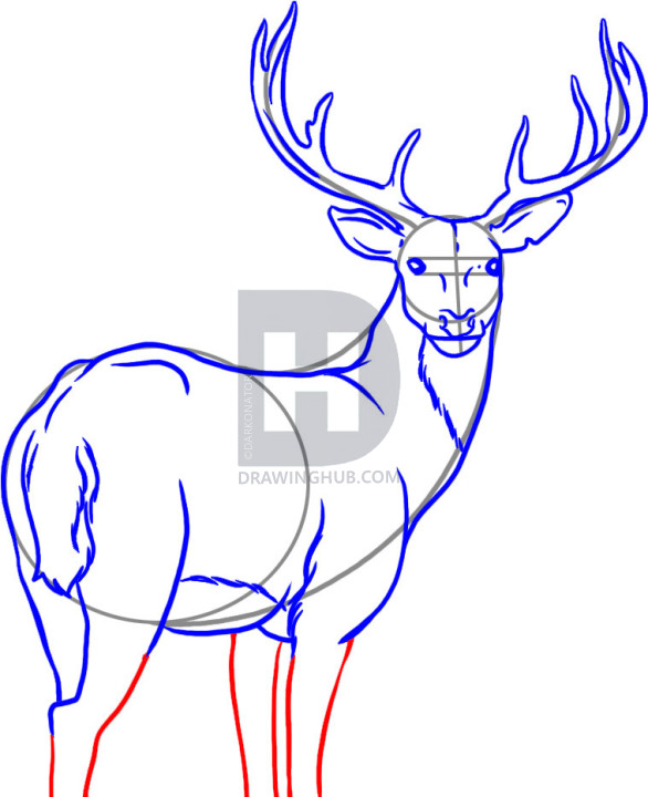 586x720 How To Draw A Deer, Step