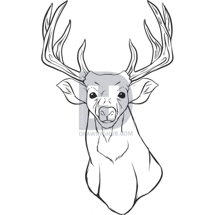 720x720 How To Draw A Realistic Deer, Draw Real Deer, Step
