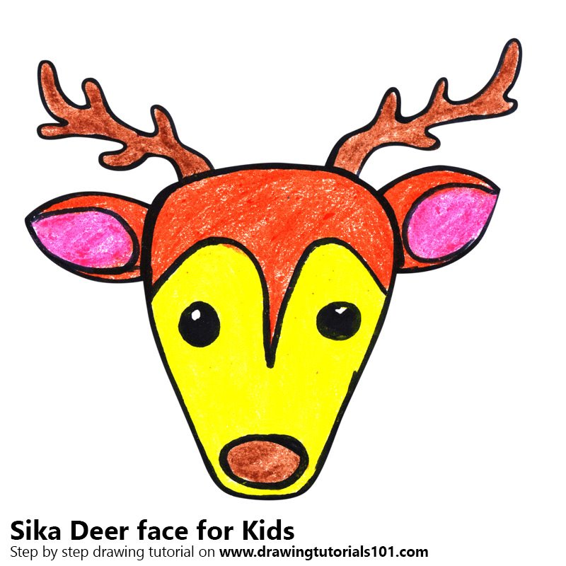 800x800 Learn How To Draw A Sika Deer Face For Kids