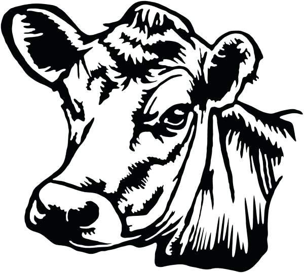 600x540 Cow Head Drawing Deer Head Drawing Step