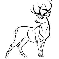 250x250 Deer Drawing Easy Realistic Mule A Head Christmas Very I Fertility