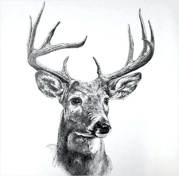 600x590 reindeer drawings draw reindeer caribou last christmas reindeer