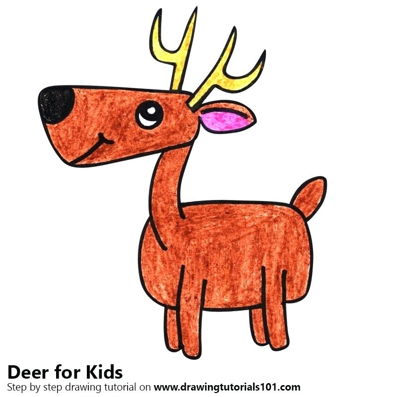 800x800 Deer Drawing For Kids Step
