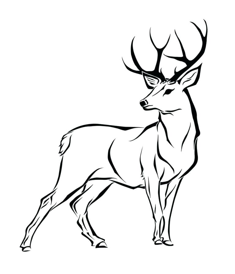 768x896 Easy To Draw Reindeer Learn Use Easy To Draw Reindeer This Step