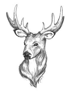 236x333 Caribou Drawing