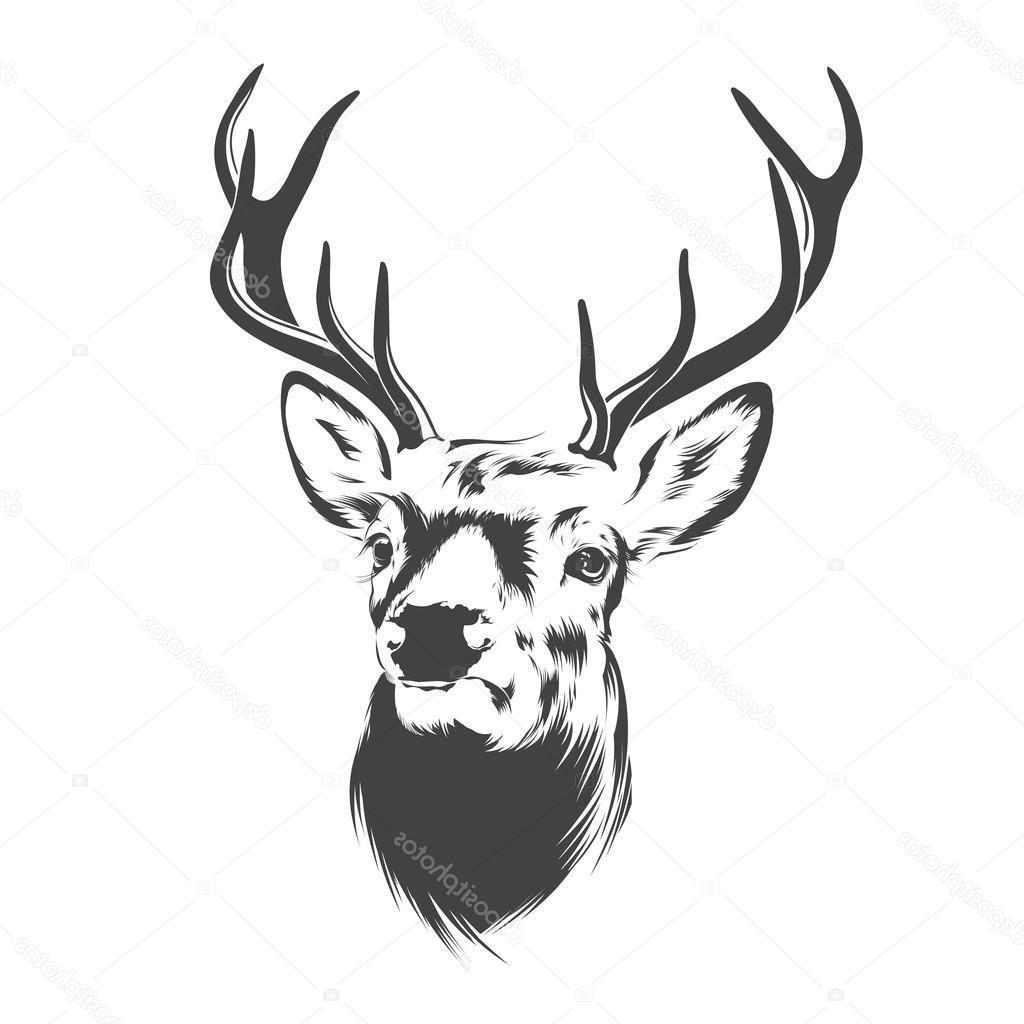 1024x1024 cute how to draw a deer head how to draw a deer head deer head