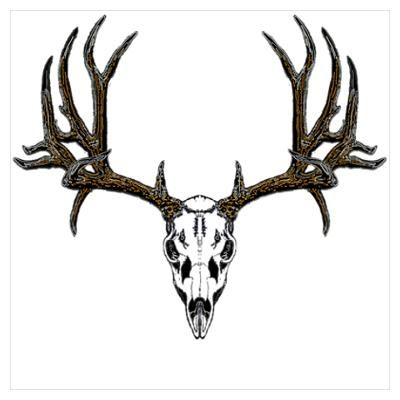 400x400 european mount mule deer my ideas deer skull drawing, deer
