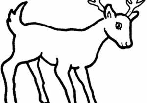 300x210 Drawing Of A Deer How To Draw A Deer Head Drawingforall