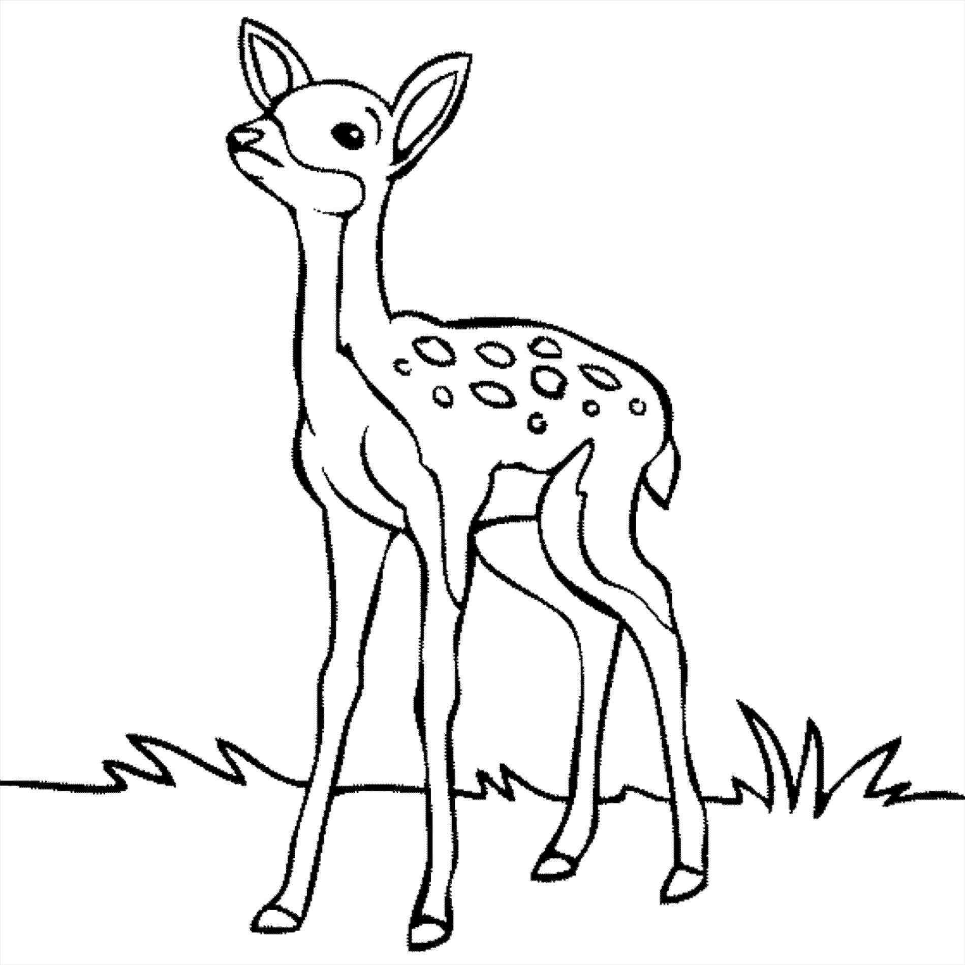 1899x1899 How To Draw An Easy Deer A For Kids Esy Ings Ides Fun