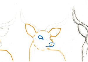 300x210 Steps To Draw A Deer How To Draw A Deer Easy Drawing Stepstep
