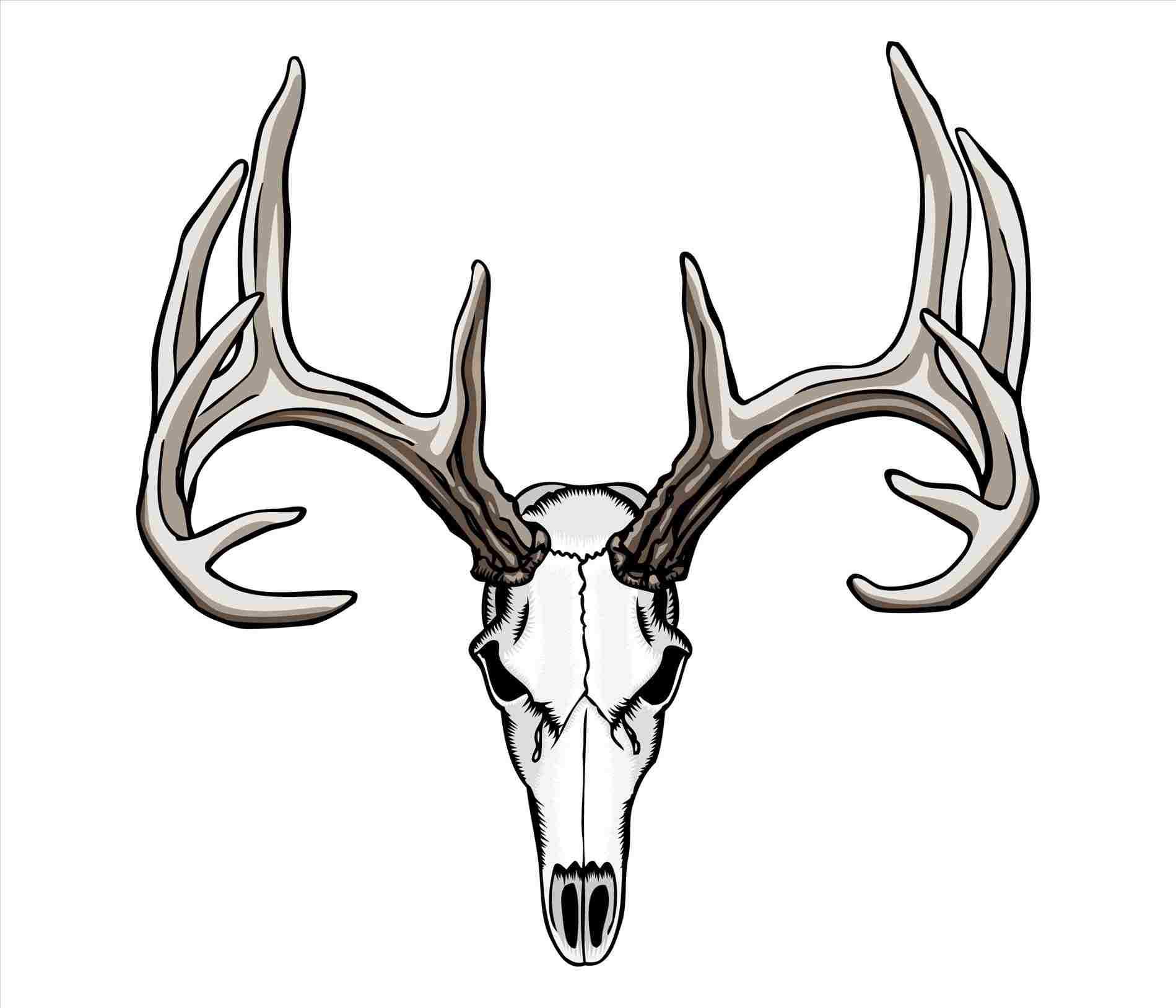 1899x1628 Deer Head Drawing Easy
