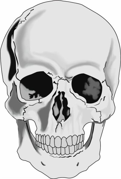 400x590 Deer Skull Png