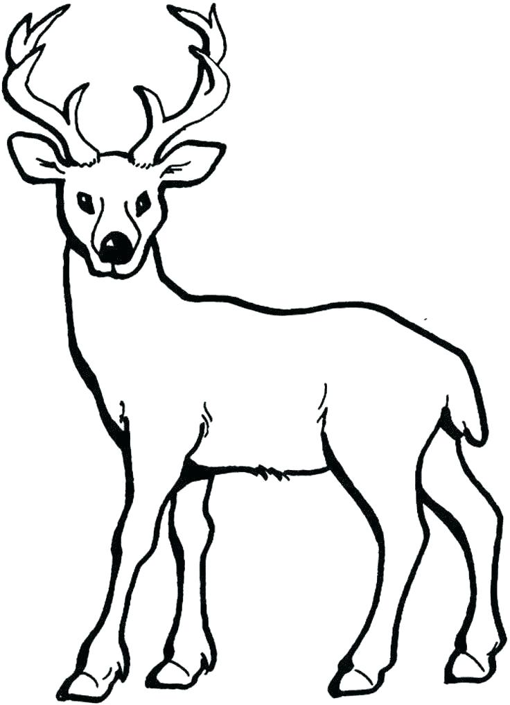 736x1017 How To Draw A Baby Deer