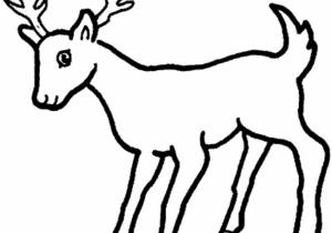 300x210 Deer Drawing Step