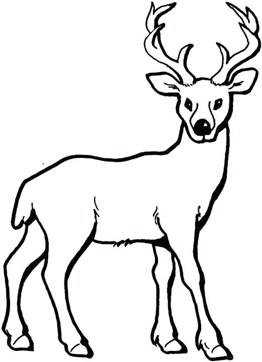 521x720 Deer Drawing For Kids Deer Coloring Pages For Kids A Architecture