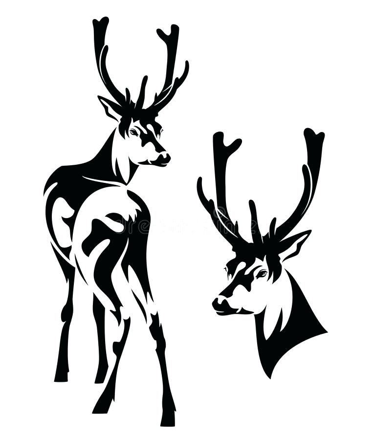 765x900 Deer Outline Best Fall Cookie Ideas Outlines Head Drawing