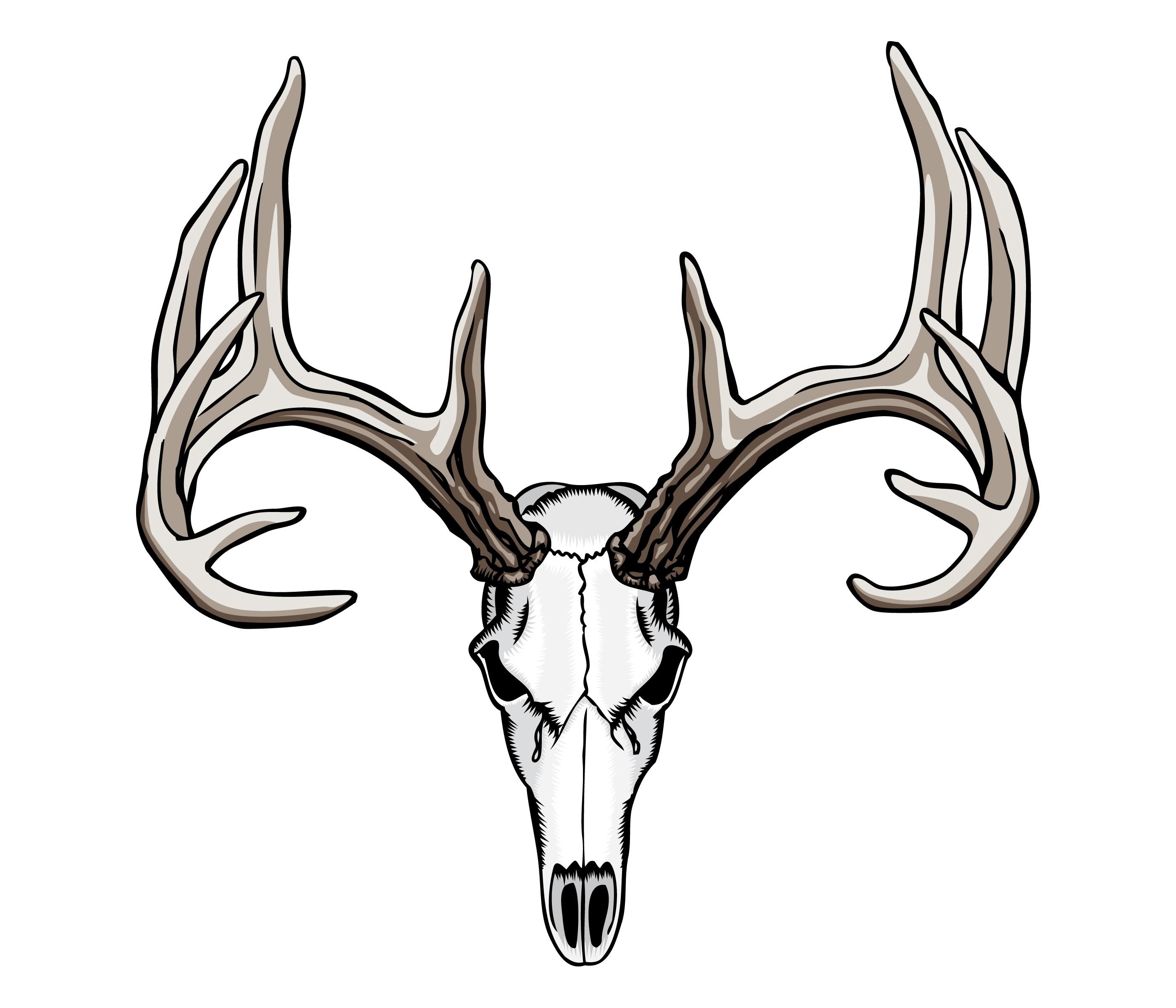 2800x2400 Deer Skull Drawing