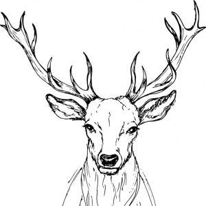 300x300 Stock Photo Deer Skull Illustration Drawing Engraving Ink Line Art