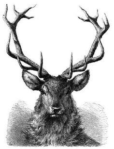 236x307 awesome deer head tattoo images deer, deer head tattoo, drawings
