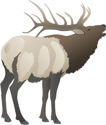 340x400 Collection Of Free Drawing Deers Red Stag Download On Ui Ex