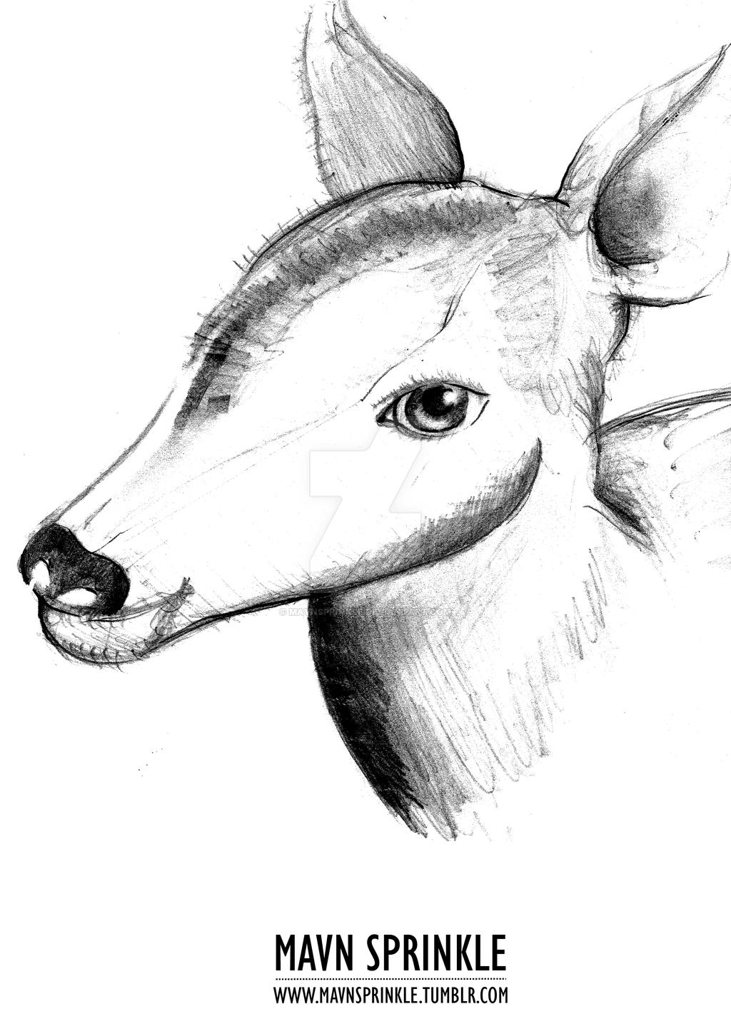 1024x1414 Deer